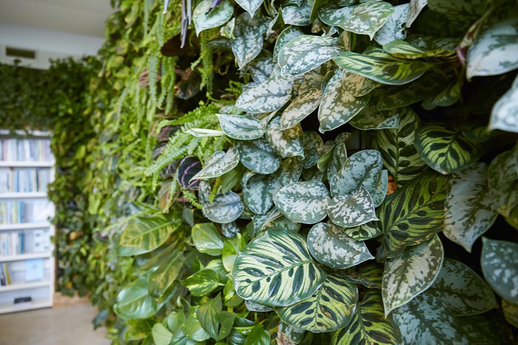 Veelgestelde vragen over groene wanden